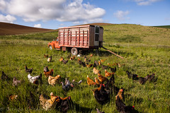 Creative Coop (Culinary Fool) Tags: palouse usa washington truck 2016 clouds coop chickens wa brendajpederson travel hen photography red chickencoop roadtrip culinaryfool may hills travelwa 2470mm28