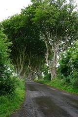 DSC05112 (raehyunie) Tags: dark hedges ireland