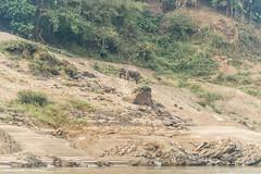 _RJS8172 (rjsnyc2) Tags: richardsilver richardsilverphoto richardsilverphotography nikon nikond810 d810 laos intrepidtravel asia mekong river mekongriver water travel travelphotographer travelphotography