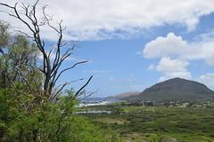 26-May 22 2016-Oahu HI-Makapu'u Summit (Barb Mayer) Tags: kokocrater coast ocean pacificocean makapuu hawaii oahu