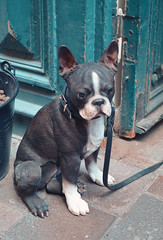 Sweden Dog (Akustiksamuray) Tags: dog kpek isve sweden stockholm sculpture animal kopek puppy realistic street north europe