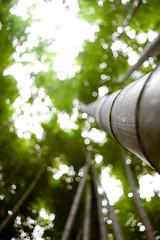 Arashiyama bamboo groove (badcrc) Tags: japan eos eos350d