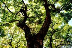 Vida (marcusviniciusdelimaoliveira) Tags: tronco galhos folhas cu luz ligth leaf sombra