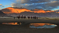 Reflect before the journey is complete... (Lopamudra !) Tags: lopamudra lopamudrabarman lopa landscape ladakh pool sunset sundown sunshine twilight evening dusk nubra nubravalley valley vale jk india colour color himalaya highaltitude himalayas highland sand dune camel bactrian mountain mountains hill reflection reflexion philosophy life reflect vista picturesque animal sky clouds darkness nightfall shadow shade lightandshade light journey