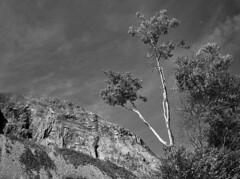 Cannon Mountain (Tim Ravenscroft) Tags: cannon mountain whitemountains new hampshire usa nh monochrome blackandwhite landscape