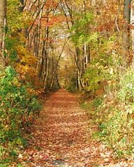 Autumn Stroll by Alan Grubb (AccessDNR) Tags: 2016 photocontest fall autumn scenery sceniclandscape northpoint statepark trail path leaves foliage