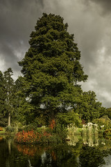 _MG_0117_The Mansion Pond (lee.45) Tags: ardingly england unitedkingdom gb wakehurstplace royalbotanicgardens arboretum garden canoneos6d landscape autumn