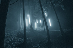 Lightning forest (David Bishop Noriega) Tags: forestalumina light forest monochromatic bw david bishop noriega davidbishopnoriega