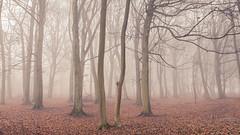 Fog (hammermad) Tags: forest fog foggy fun foot glow trees tone photography exposure sunrise ashridge winter coldmorning