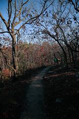 7Q7A6192 (armincreates) Tags: nature fall colors trees lake mountains hike dog puppy beauty trail panorama sunset cows farm wisconsin illinois usa walk