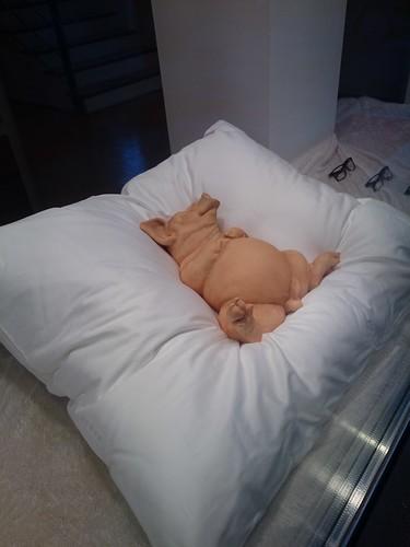 comfy pig
