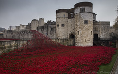 Poppies (SarahO44) Tags: world uk flowers red sea london tower tom canon ceramic paul blood war united first kingdom poppy poppies tribute ww1 piper lands swept moat cummins seas 6d