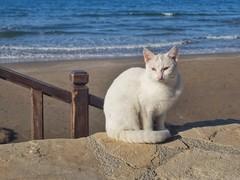 Side (Mariasme) Tags: blue pet beach cat turkey side textures themediterraneansea