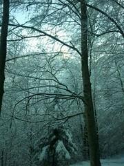 Promenade en raquettes (Stefho74) Tags: france montagne hiver neige savoie montblanc hautesavoie rhonealpes sallanches raquettes