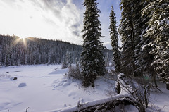 Winter wonderland - Crescent Falls, AB (D.Spence Photography) Tags: winter canada david mountains nature dave rockies photo december pentax falls crescent alberta nordegg wilderness plains crossroads kootenay k5 spence 2014 wilpentax spencekootenay