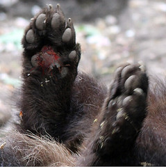 1462 (Jasper Kyodaina) Tags: man guy feet giant paw squish sole stomp crush giantess trample