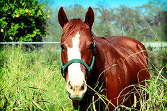 horsey (marce_garal) Tags: horse naturaleza color nature beauty animal fauna caballo lomo hermoso fauxlomo
