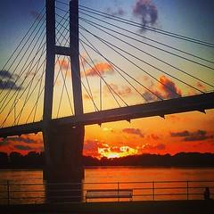 bridge_tanya redner