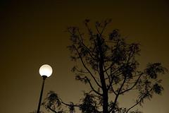 Interlude I (shumpei_sano_exp7) Tags: light sunset bw tree lamp monochrome sepia canon eos orlando italia tramonto 5d canon5d luce cfp canoneos5d eos5d jjjohn ~jjjohn~ giovanniorlando wwwgiovanniorlandoit