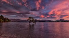 Drama (RoosterMan64) Tags: red newzealand panorama cloud sunrise canon moody panoramic drama wanaka lakewanaka 1740l wanakatree