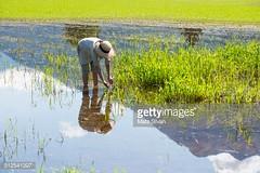 risaia (quintaainveruno) Tags: donna fotografia 4044 adulto orizzontale caucasico solodonne soltantounapersona