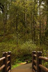 Take a walk in the beautiful Silver Falls State Park! (Anna Calvert Photography) Tags: park bridge trees nature water oregon creek landscape moss spring unitedstates silverton hiking trails canyon recreation pathways silverfallsnationalpark