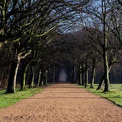 Enter the dark forest (Wouter de Bruijn) Tags: road trees mist fog forest landscape lane fujifilm lined oostkapelle westhove xt1 fujinonxf35mmf14r mantelingen