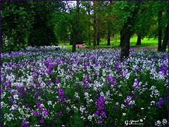 PARC BARGOIN, TERRE D'AUVERGNE (Gilles Poyet photographies) Tags: fleurs soe auvergne puydedme autofocus royat aplusphoto parcbargoin artofimages rememberthatmomentlevel1