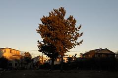 2011/01/17 07:03 Fujisawa (Masayo Nabeshima) Tags: morning sunlight nikon d3