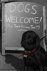 Dogs welcome selective colour (Catherine Elliott) Tags: england dog labrador dorset chalkboard lulworth selective pubsign selectivecolor selectivecolour jurassiccoast