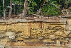 Life on the Edge (EyeOnEnvironment) Tags: sea outdoors sandstone britishcolumbia cliffs erosion shore gulfislands geology valdesisland