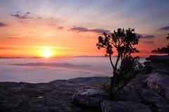 dreaming of summer (Marm O. Set) Tags: longexposure tree sunrise canon tripod pancake 40mm mcafeesknob mcafees ef40 40pancake