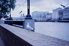 Thames theme ( toma ) Tags: city uk blue urban seagulls london water weather thames river riverside cloudy overcast toma01