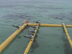 Birds on the Fishing Poles