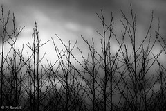 BranchStract (PJ Resnick) Tags: trees light sky bw abstract black texture nature backlight clouds contrast digital canon blackwhite washington branches 100mm pacificnorthwest usm pnw rectangle ef rectangular resnick 100mmmacro 4x6 nisquallynationalwildliferefuge dupontwa 5dmarkii canon5dmarkii eos5dmarkll ef100mmf28lusmmacro pjresnick pjresnickgmailcom perryjresnick pjresnick