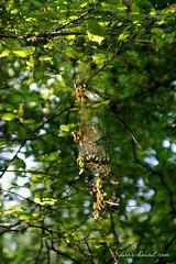 Picardie (Orayan) Tags: red france fruit automne trek campagne randonnée sauvage baies fruitsrouges leboisdemolle laneuvilledaumont