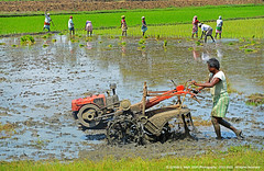 """IF YOU ATE TODAY, THANK A FARMER"" (GOPAN G. NAIR [ GOPS Photography ]) Tags: street india green photography paddy farm farming fields farmer tamilnadu gops gopan gopsorg gopangnair gopsphotography"