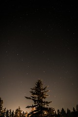 Above Us (mitchel_ring) Tags: stars space longexposure tree nikon outdoors washington usa bigdipper constellation night fade darkness light