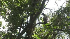 Pigeon Branch (ohange2008) Tags: plumtree pigeon garden