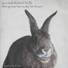 Me And You (Jeric Santiago) Tags: pet rabbit bunny animal lyrics conejo lapin hase kaninchen meandyou うさぎ 兎 shehim winterrabbit
