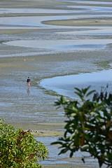 Parksville BC (vibrant_art) Tags: beach parksville vancouverisland tighnamara surf sand forest beautifulbc supernaturalbc