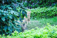 Today's Cat@2016-07-24 (masatsu) Tags: cat catspotting thebiggestgroupwithonlycats pentax mx1