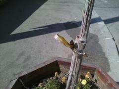 IMG12224 (chicore2011) Tags: municipalflowers pots