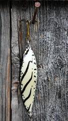 IMG_0046 (www.ilkkajukarainen.fi) Tags: feather hand made folk art raw outsider sulka lure hook erkkivirolainen arkadiankatu helsinki suomi finland eu europa fishing viehe uistin blinker drag silver pheasant point itsetehtyelämä