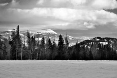 Mountains off in the Distance from the Taggart Lake Trailhead (Black & White, Grand Teton National Park) (thor_mark ) Tags: blackwhite blueskieswithclouds capturenx2edited centralgrosventrerange cloudsabove colorefexpro day3 evergreentree evergreens grandtetonnationalpark grosventrerange lookingse mountains mountainsindistance mountainsoffindistance nature nikond800e portfolio project365 snowylandscape taggartlaketrailhead tetonrangeyellowstonearea trees wyomingcountryside moose wyoming unitedstates
