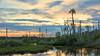 Ozello FL (Michael R Hayes) Tags: absolutelystunningscapes sunset ozello florida gulfcoast palmtree
