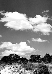 mpix 59 081016 7n 50mm IL 400 081516 026e (BDC Photography) Tags: pipecreek texas usa epsonperfectionv600photoscanner ilford ilfordsuperxp2400isofilm filmnoiretblanc canon canoneos33v canoneoselan7n 35mmfilm blackwhitefilm fence clouds texashillcountry banderacounty latigoranch southtexas bw58mm16orange0404x550mrcfilter bwfpro58mm010uvhaze1xmrcfilter bwfpro58mm0222xmrcyellowfilter canonef50mmf14usmlens bwfp