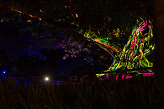 _MG_4821.jpg (Tibor Kovacs) Tags: night colours tree vivid australia events sydney projections light
