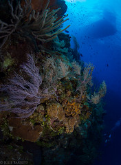 Little Cayman (jcl8888) Tags: healthy alive nikon d7200 cayman islands reef tokina 1017mm underwater scuba diving liveaboard boat travel vacation ocean sea saltwater color blue purple orange fish lookingup