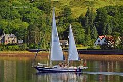 Tenacity of Bolton (Zak355) Tags: rothesay isleofbute bute scotland scottish riverclyde tenacityofbolton sailing boat yacht tallshipsyouthtrust